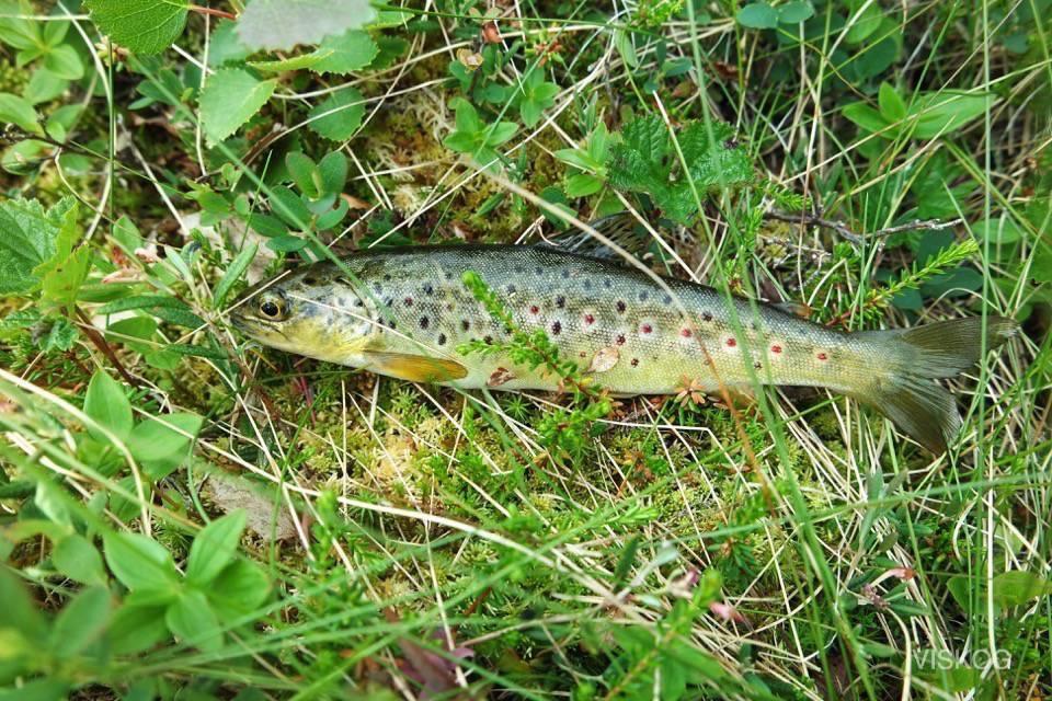 Ble en fisk på 10 kast under en kort pause..var veldig liten så den ble satt ut igjen:)